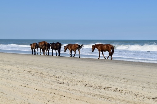 OBX events 2018 August